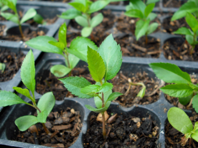 growing-stocks-apple-of-seeds