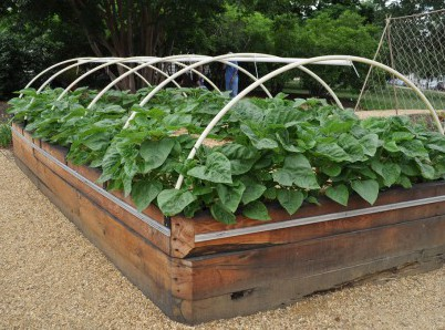 raised-bed-vegetable-garden-10